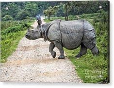 Rhino Crossing Acrylic Print