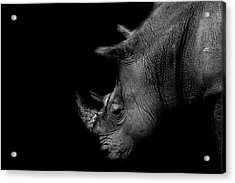 Rhino Acrylic Print by Martin Newman