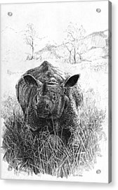 Rhino Acrylic Print by Paul Illian