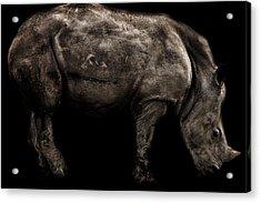 Rhino Portrait Acrylic Print by Martin Newman