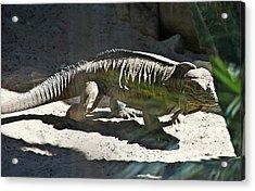 Acrylic Print featuring the photograph Rhinoceros Iguana by Miroslava Jurcik