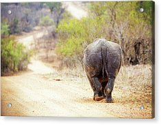 Rhinocerous Walking Away Down Road Acrylic Print