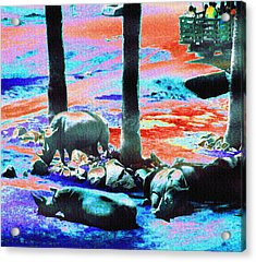 Rhinos Having A Picnic Acrylic Print by Abstract Angel Artist Stephen K