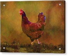 Rhode Island Red Hen Acrylic Print by Sandi OReilly