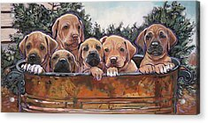 Rhodesian Ridgeback Puppies Acrylic Print
