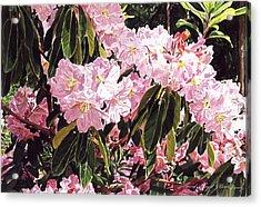 Rhodo Grove Acrylic Print by David Lloyd Glover