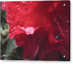 Rhododendron #2 - May 2015 Acrylic Print