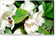 Acrylic Print featuring the photograph Rhododendron And Bee by Larry Keahey