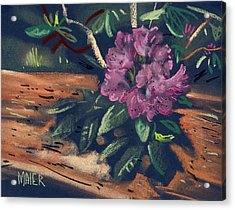 Rhododendron Acrylic Print by Donald Maier