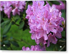 Rhododendron Acrylic Print