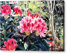 Rhododendrons Of British Properties Acrylic Print by David Lloyd Glover