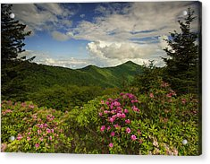 Rhododendrons On The Blue Ridge Parkway Acrylic Print