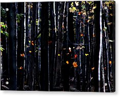Acrylic Print featuring the photograph Rhythm Of Leaves Falling by Bruce Patrick Smith