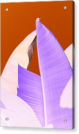 Ribbed In Violet Acrylic Print by Florene Welebny