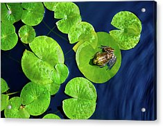 Ribbit Acrylic Print by Greg Fortier