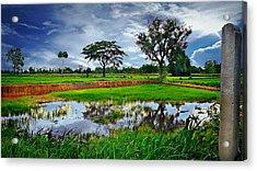 Rice Paddy View Acrylic Print by Ian Gledhill
