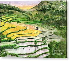 Ricefield Terrace II Acrylic Print by Melly Terpening