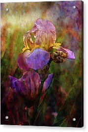 Rich Purple Irises 0056 Idp_22 Acrylic Print