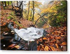 Ricketts Glen State Park Ganoga Falls Allegheny Mountains Pennsylvania Acrylic Print by Mark VanDyke