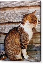 Ricky Acrylic Print by JAMART Photography