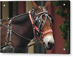 Acrylic Print featuring the photograph Riding New Orleans Style by Lori Mellen-Pagliaro