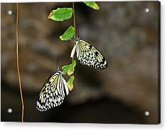Acrylic Print featuring the photograph Right And Left Wings by Teresa Blanton