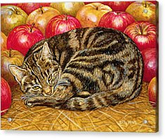 Right Hand Apple Cat Acrylic Print by Ditz