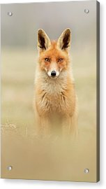 Right Into Your Soul - Red Fox Acrylic Print by Roeselien Raimond