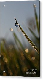 Right Side Down Acrylic Print by Laura Horgan