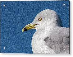 Acrylic Print featuring the mixed media Ring-billed Gull Oil Portrait by Onyonet  Photo Studios