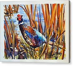 Ring Neck Pheasant By Tfb Acrylic Print by Therese Fowler-Bailey