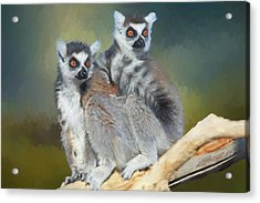Ring-tailed Lemurs- Sedona And Verde Acrylic Print
