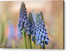 Ringing In Spring Acrylic Print