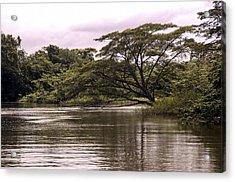 Riparian Rainforest Canopy Acrylic Print