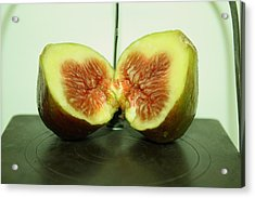 Ripe Fig On Iron Platte. Acrylic Print