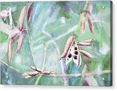 Ripe Seeds Acrylic Print