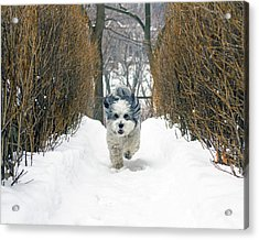 Ripley's Run Acrylic Print by Keith Armstrong