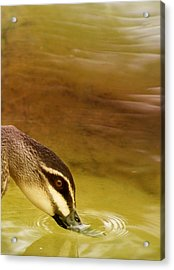 Ripples Acrylic Print by Holly Kempe