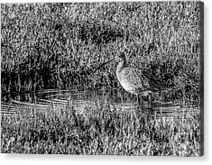 Camouflage, Black And White Acrylic Print