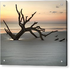 Ripples Of Sand And Driftwood Acrylic Print