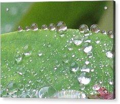 Fine Drops. Acrylic Print