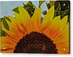 Rising Sun Acrylic Print by Odd Jeppesen