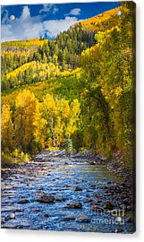 River And Aspens Acrylic Print by Inge Johnsson