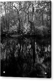 Acrylic Print featuring the photograph River Bank Palmetto by Marvin Spates