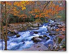 River Birch Overhangs Big Creek Acrylic Print by Alan Lenk