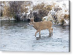 River Crossing Acrylic Print