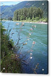 River Acrylic Print by Ken Day