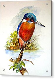 River Kingfisher Acrylic Print