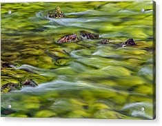 River Moss Acrylic Print by Leland D Howard