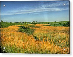 River Of Grass Acrylic Print